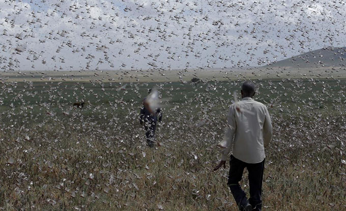Elite fighting unit from Israel uses drones and chemicals in war against Ethiopia's locusts